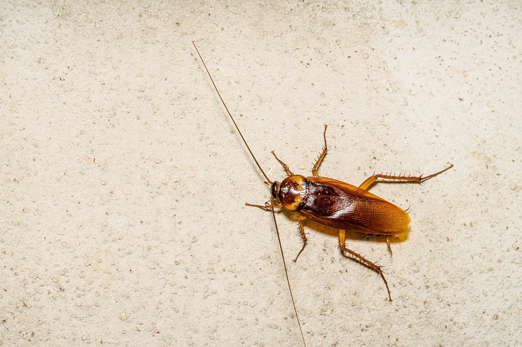 Cockroach Control, Pest Control in Dulwich, SE21. Call Now 020 8166 9746