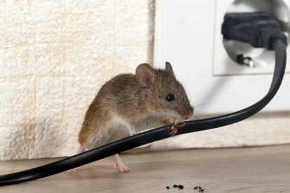 Pest Control in Cockfosters, East Barnet, EN4. Call Now! 020 8166 9746