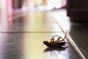 24 Hour Pest Control, Pest Control in Mayfair, Marylebone, W1. Call Now 020 8166 9746