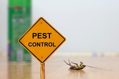 Pest Contol in Cockfosters, East Barnet, EN4. Call Now 020 8166 9746