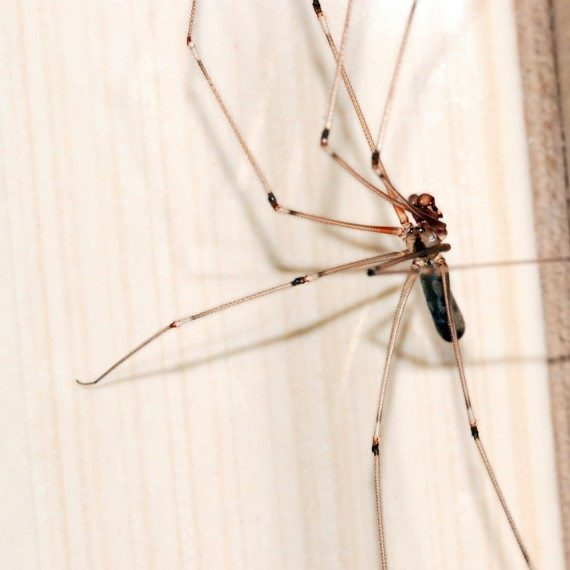 Spiders, Pest Control in Finchley Central, N3. Call Now! 020 8166 9746